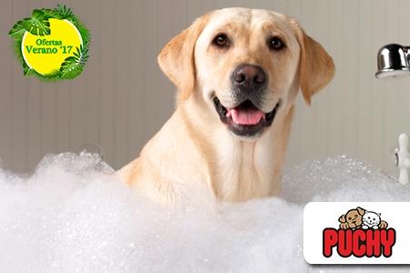 ¡Cuidados para el consentido de todos! Paga RD$390 en vez de RD$2,000 por Baño Garrapaticida y Pulgicida + Limpieza de Oído + Corte de uñas + Cepillado Dental Canino + Vaciado de Glándulas perianales en la Veterinaria Puchy Pet Shop.