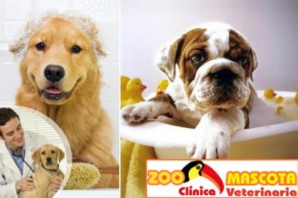 ¡Baño para tu mascota! Paga RD$349 en vez de RD$1,100 por Baño + Garrapaticida + Corte de Uñas + Limpieza de Oído + Desparasitante + Vitaminas en Zoo mascota.