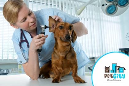 ¡Consiente a tu Mascota! Aprovecha y Paga  RD$400 en vez de RD$800 por Corte de Uñas + Profilaxis dental para cualquier tamaño en Pet City.