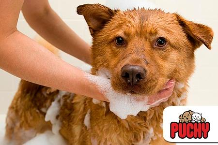 ¡Cuidados especiales para tu mascota! Paga RD$295 en vez de RD$1,500 por un Baño con Shampoo especial para cada manto + Tratamiento Hidratante + Gotitas de Brillo + Colonia + Limpieza do Oído + Corte de Uñas + Cepillado Dental + Pañoleta Decorativa en la Veterinaria Puchy Pet Shop.